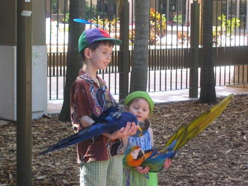 Holding parrots